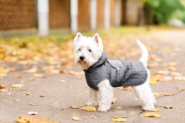Comment choisir un manteau d'hiver pour votre chien ?